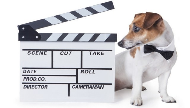 9 Best Movies About Dogs Available on Amazon Prime