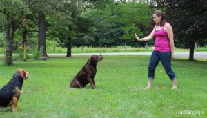 How To Train A Dog To Stay