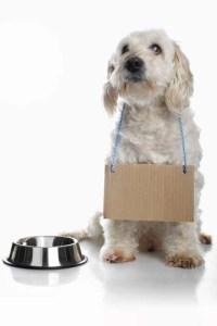 Increasing Dog Adoption Rates