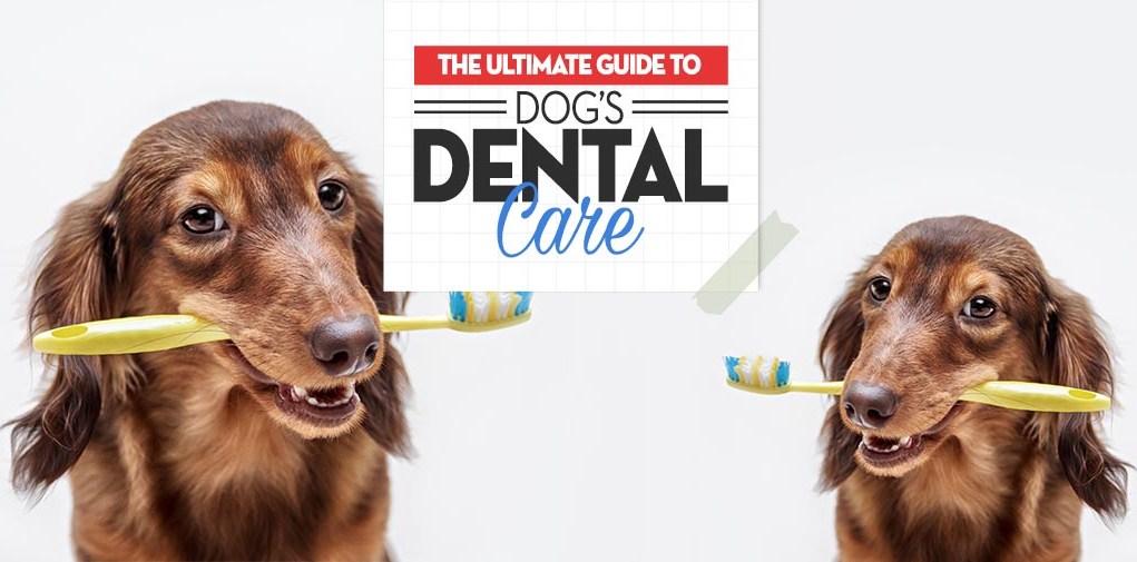 Pet Owner's Full Guide to Dog Dental Care