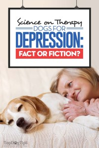 Science on Therapy Dogs for Depression - Fact or Fiction