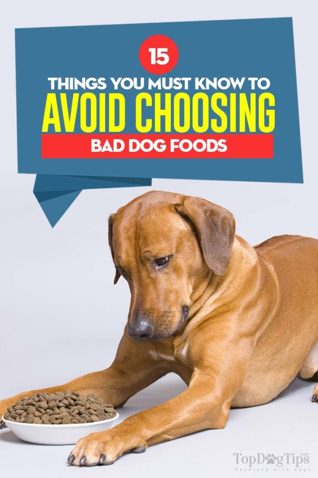 The 15 Things You Must Know to Avoid Choosing Bad Dog Food