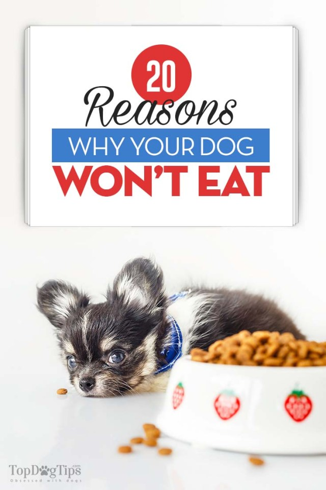 The 20 Reasons Why Your Dog Won't Eat