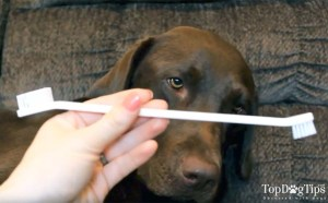 The Best Toothbrush for Dogs