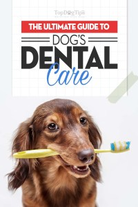 The Guide on Dog Dental Care