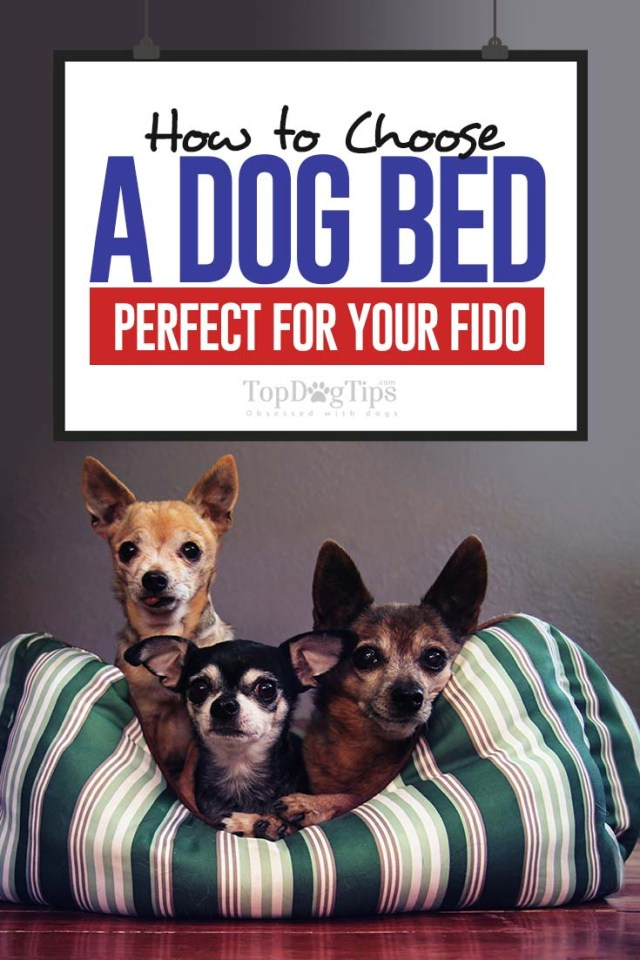 Tips on How to Choose a Dog Bed Perfect for Your Fido