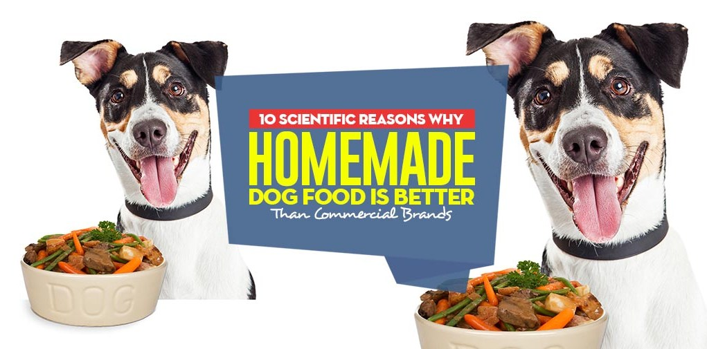 Top 10 Scientific Reasons Homemade Dog Food is Better Than Commercial Foods