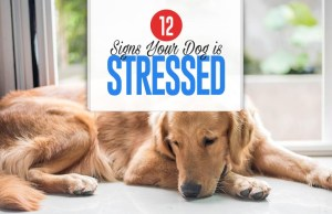 Top 12 Signs Your Dog Is Stressed