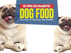 Top 15 Tips on Diabetic Dog Food and How to Feed Dogs with Diabetes