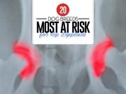Top 20 Dog Breeds Most at Risk for Hip Dysplasia