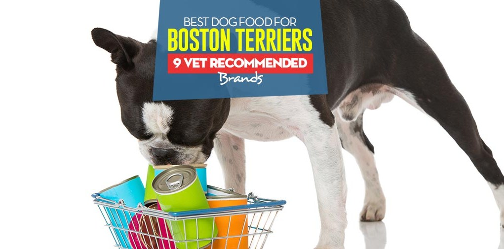 Top Best Dog Food for Boston Terriers