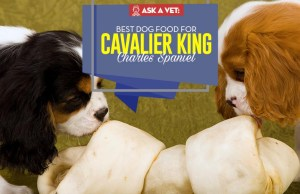 Top Best Dog Food for Cavalier King Charles Spaniel