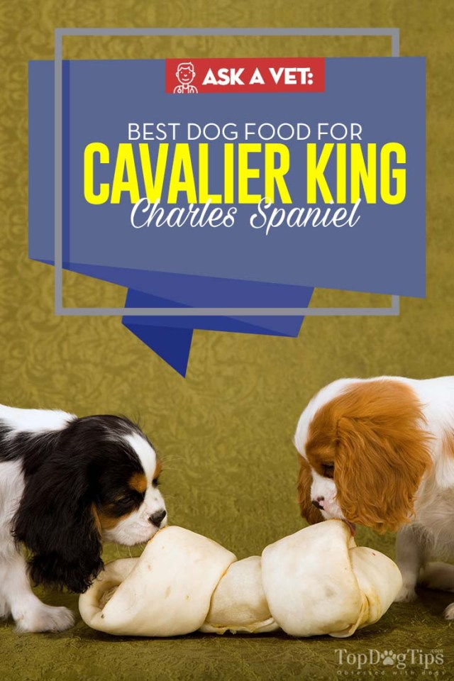 Top Rated Best Dog Food for Cavalier King Charles Spaniel