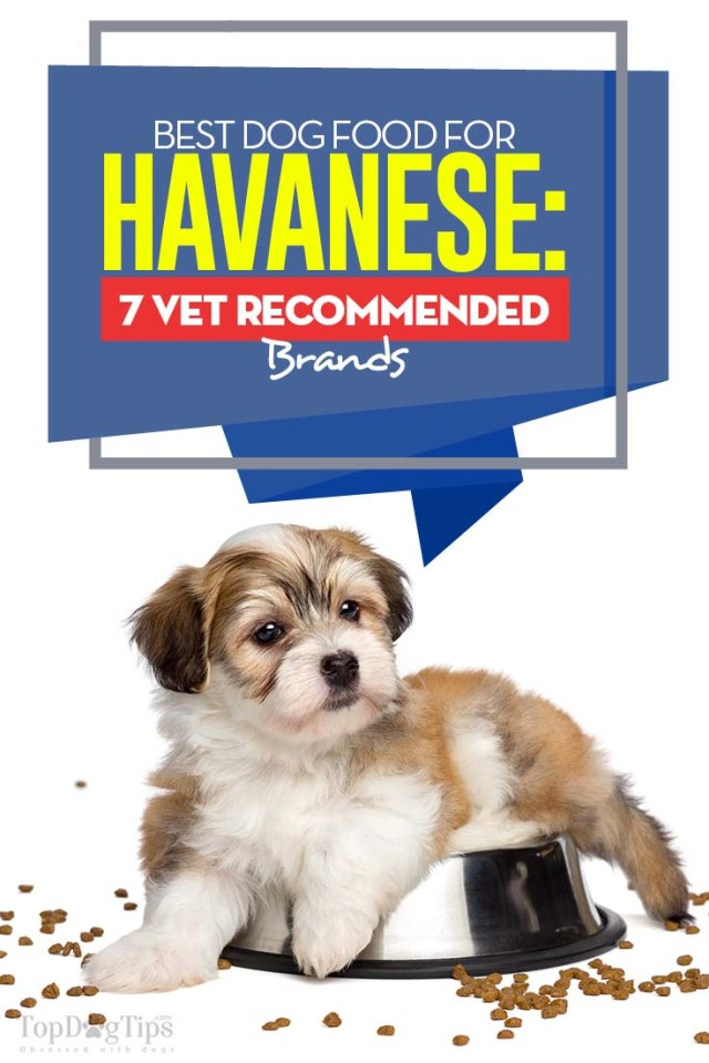 Top Rated Best Dog Food for Havanese