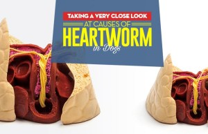 What Are the Causes of Heartworm in Dogs