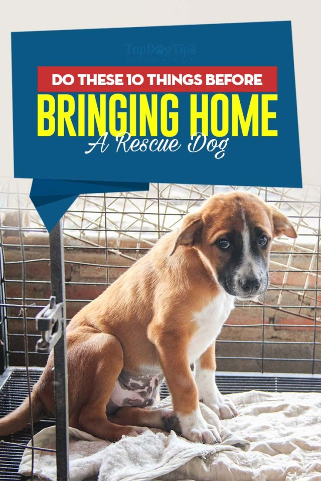 10 Things You Have to Do Before Bringing Home A Rescue Dog