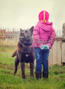 Angry dog stares at a fearless child