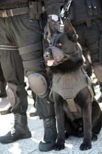 Bomb sniffing police dog on duty