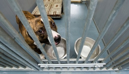 Find a Reputable Animal Rescue Facility