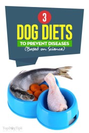 Dog Food Diets to Prevent Diseases