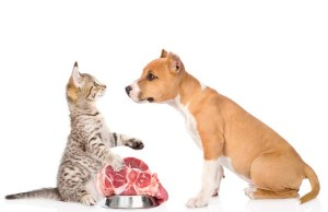 Dogs Environmental Impact of Meat Consumption and What You Can Do
