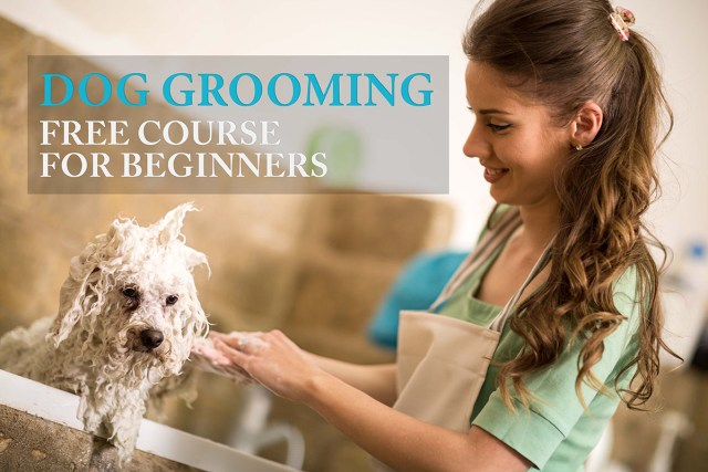 How to Groom a Dog 101: A Beginner's Guide