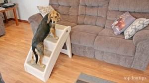 PetSafe Solvit PupSTEP Dog Stair Review