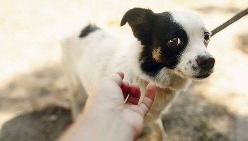 5 Signs of Dog Abuse