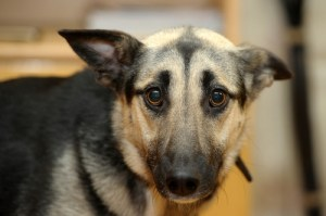 Science of Anxiety In Dogs