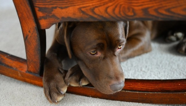 12 Signs Your Dog Is Stressed