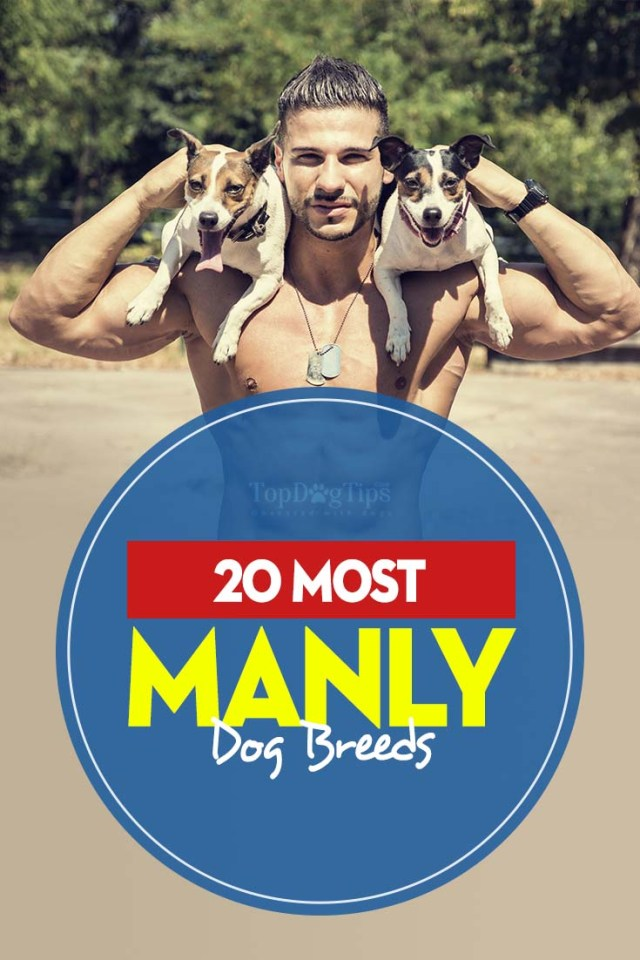 The 20 Most Manly Dog Breeds