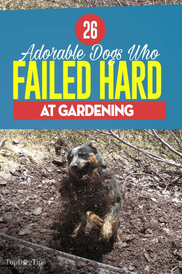 The 26 Adorable Dogs Who Failed Hard At Gardening
