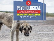 The 5 Psychological and Behavioral Signs of Dog Abuse