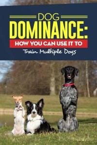 The Dog Dominance Guide