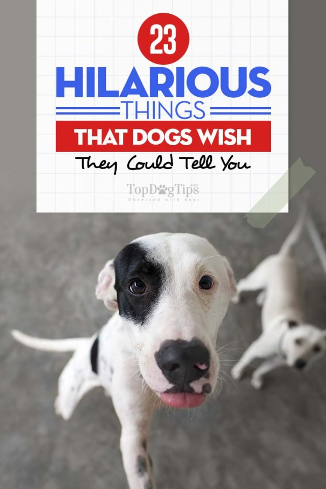 The Hilarious Things That Dogs Wish They Could Tell You