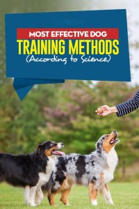 The Most Effective Dog Training Methods