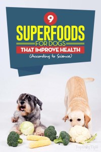 The Superfoods for Dogs That Improve Their Health