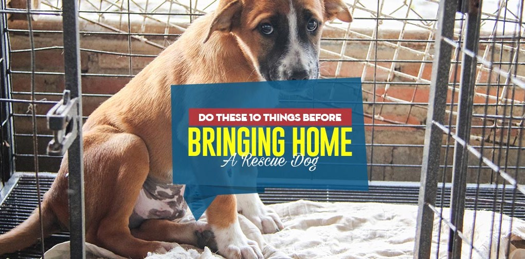 Top 10 Things To Do Before Bringing Home A Rescue Dog