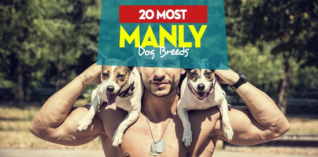 Top 20 Most Manly Dog Breeds