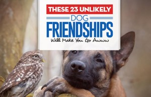 Top 23 Unlikely Dog Friendships Will Make You Go Awww