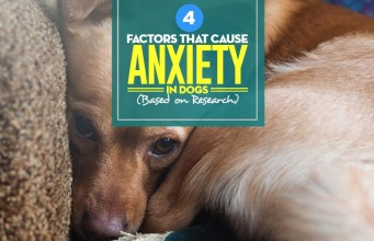 Top 4 Factors That Cause Anxiety in Dogs Based on Science