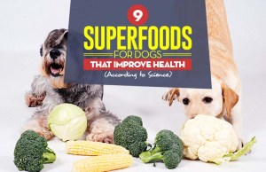 Top 9 Superfoods for Dogs That Improve Their Health (According to Science)