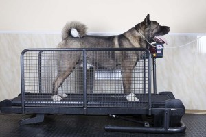 Top Best Dog Treadmill for Dogs Recovery and Exercise