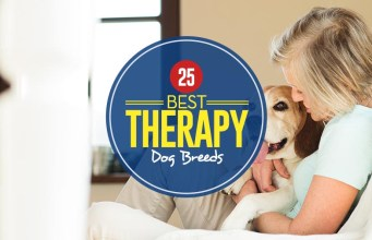 Top Best Therapy Dog Breeds List