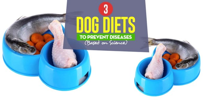 Top Dog Food Diets to Prevent Diseases