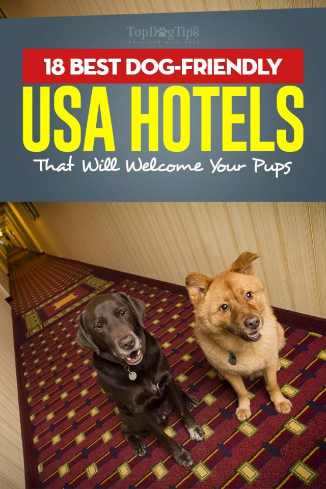Top Rated 18 Best Dog-Friendly USA Hotels