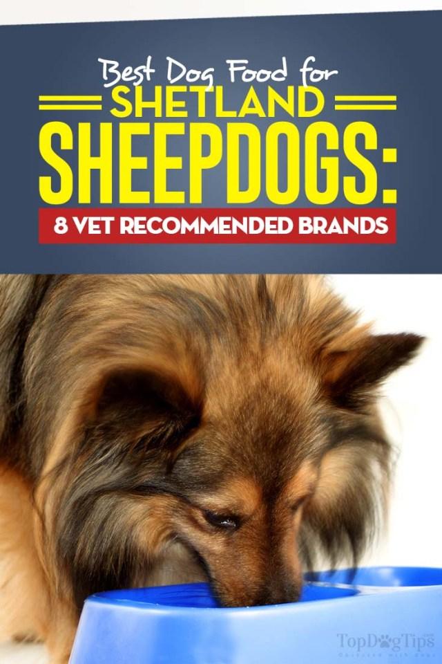 Vet Recommended Best Dog Food for Shetland Sheepdogs