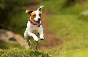 You Can Now Find Out If Your Dog Has ADHD