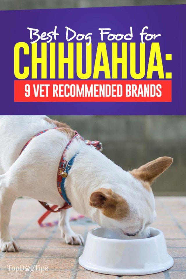 Best Dog Food for Chihuahua - Top Vet Recommended Brands