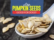 Can Our Dogs Eat Pumpkin Seeds